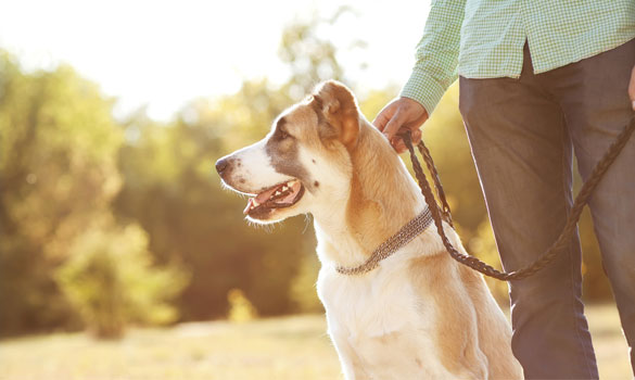 Dog Walking Sitting Alexandria Va Passionately Pets